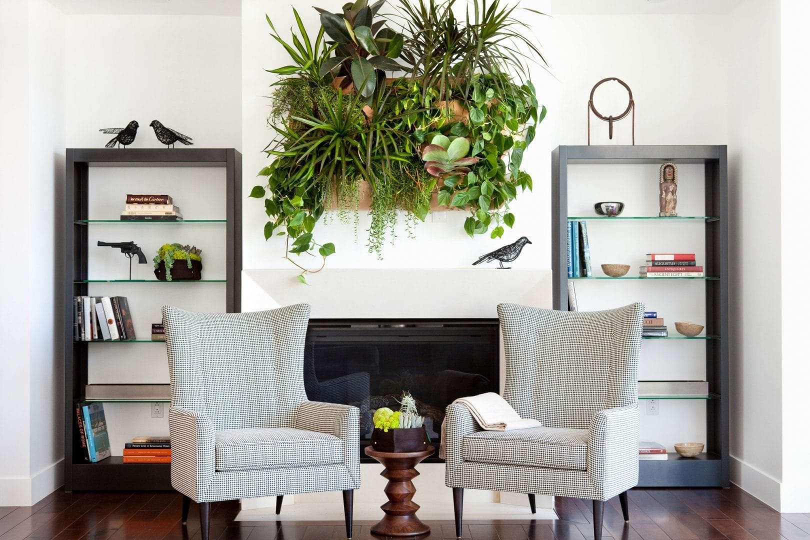house plants hanging plants