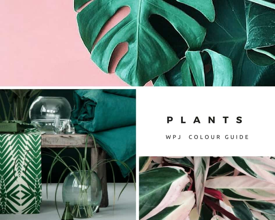 decorating with green plants