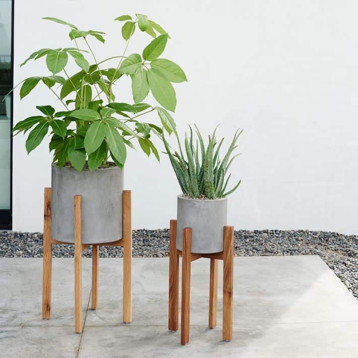 house plants succulents